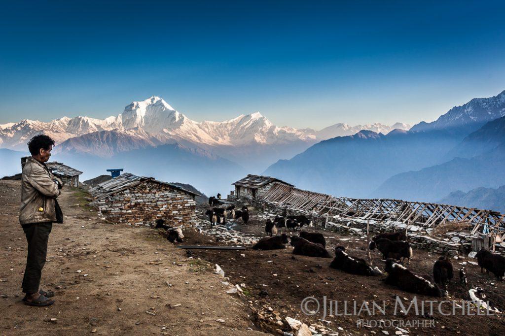 Dhaulagiri Range Views from Khopra Ridge, Annapurna, Nepal