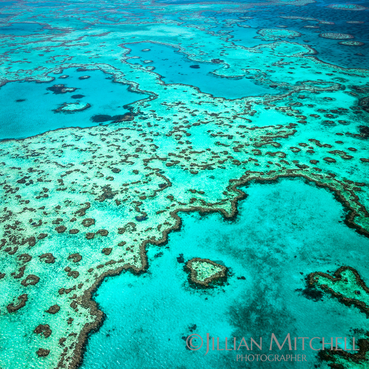 Heart Reef - Great Barrier Reef Views
