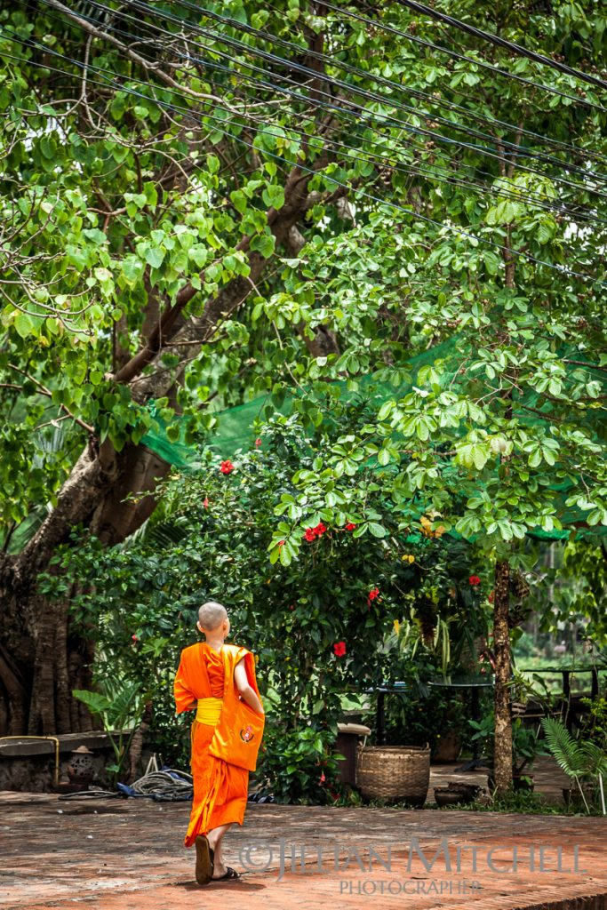 A monk strolling along the lush streets of Luang Prabang, Laos.